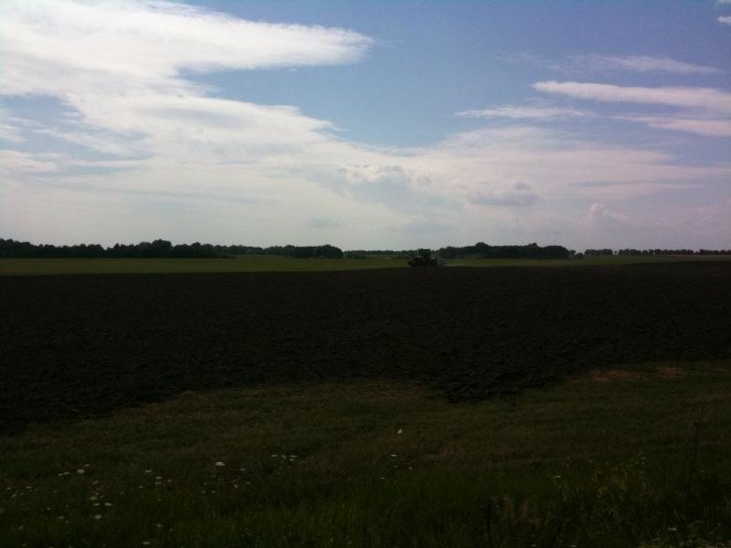 openfield.jpeg